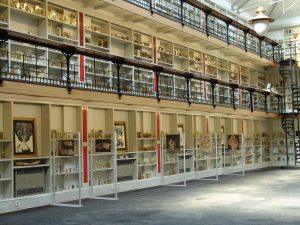 The Pathology Museum