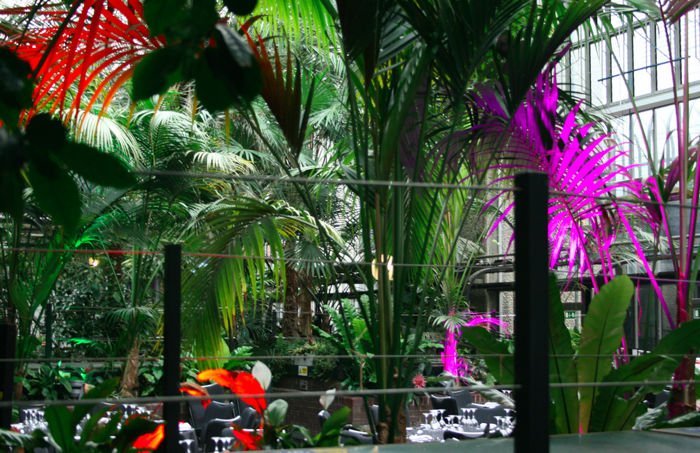 The Barbican Conservatory (it is free!!)