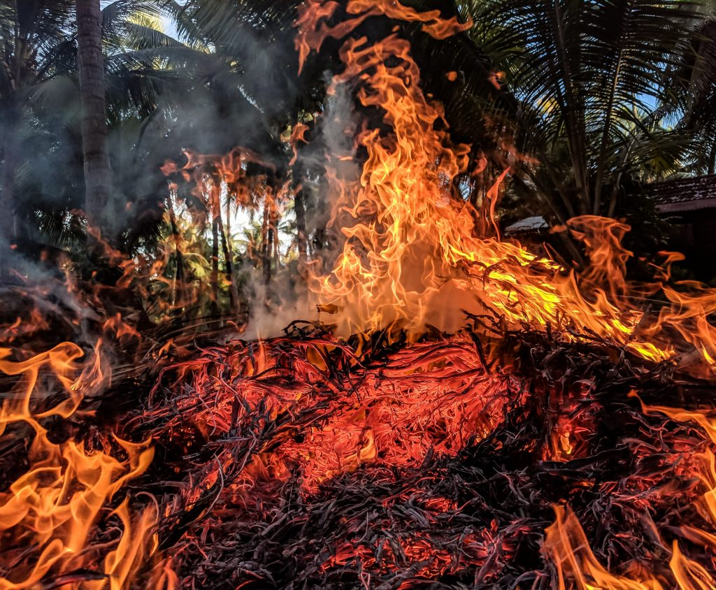 The devastating fires destroying the Amazon Rainforest